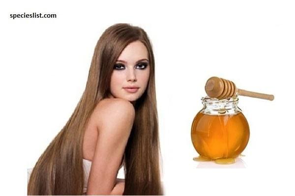 Dưỡng tóc mềm mượt nhờ mật ong và dầu ô liu