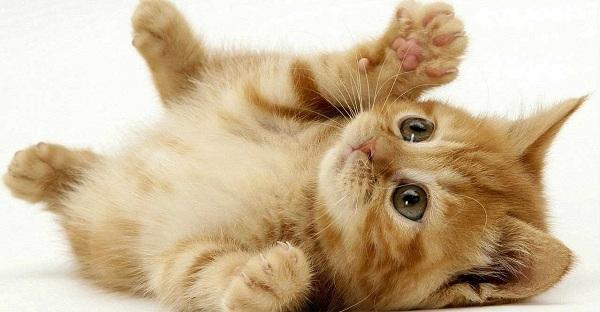 Cách để chọn mèo phù hợp