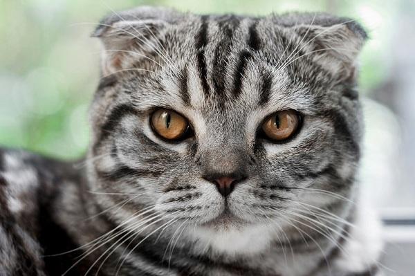 Nên nuôi mèo gì?