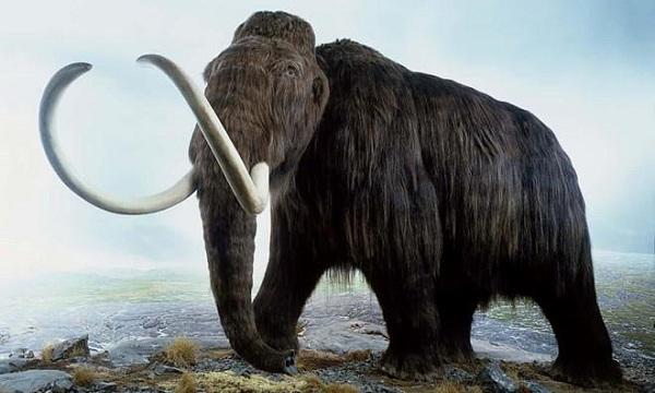 Quá trình tiến hóa của voi ma mút