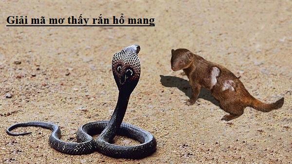 Mơ thấy rắn hổ mang là điềm lành hay dữ