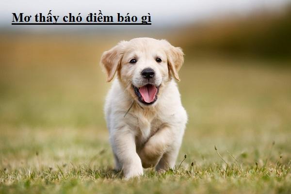 Ý nghĩa tâm linh khi mơ thấy chó